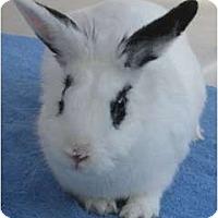 Adopt A Pet :: Aggie May - Santee, CA
