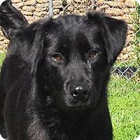 Adopt A Pet :: Pandora - New Canaan, CT