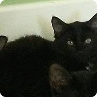 Adopt A Pet :: Cubby Bear - Seminole, FL