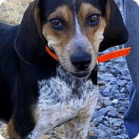Adopt A Pet :: Duke in CT - East Hartford, CT