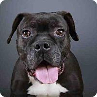Adopt A Pet :: TANK - West Palm Beach, FL