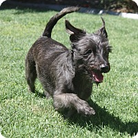 Adopt A Pet :: Hope - Henderson, NV