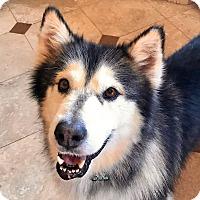 Adopt A Pet :: TEDDY - Boise, ID