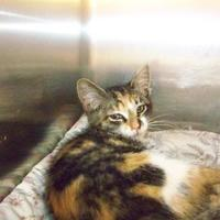 Adopt A Pet :: Tahiti - Westville, IN