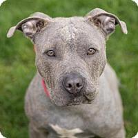 Adopt A Pet :: FRANKLIN - Methuen, MA