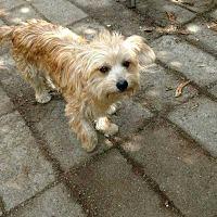 Adopt A Pet :: Taffy - Bellingham, WA