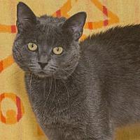 Adopt A Pet :: Bobby - Elmwood Park, NJ