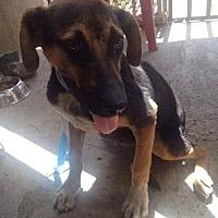 Adopt A Pet :: Shelly - San Francisco, CA