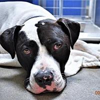 Adopt A Pet :: Moo Moo - San Jacinto, CA