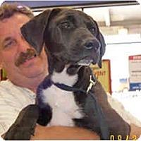 Adopt A Pet :: Mitzy - Scottsdale, AZ