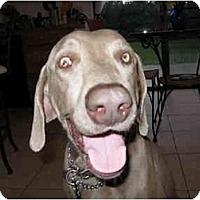 Adopt A Pet :: Logan  **ADOPTED** - Eustis, FL