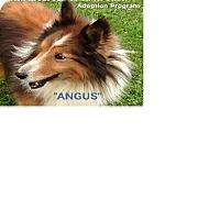 Adopt A Pet :: Angus - COLUMBUS, OH