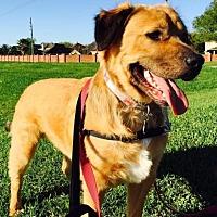 Shepherd (Unknown Type)/Collie Mix Dog for adoption in Katy, Texas - SIMBA