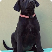 Adopt A Pet :: Tobin - Pleasant Plain, OH