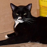Adopt A Pet :: Parker - Hammond, LA