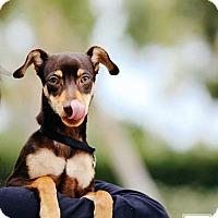 Adopt A Pet :: Tucker - Carlsbad, CA