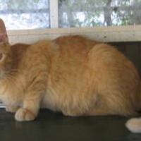 Adopt A Pet :: Grover 05-24-13 - Bulverde, TX