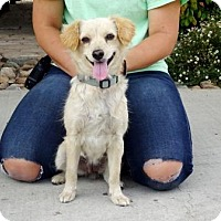 Adopt A Pet :: Terri - Lathrop, CA