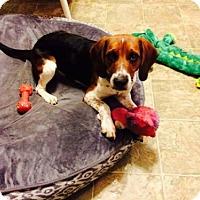 Adopt A Pet :: Phoenix - Iroquois, IL