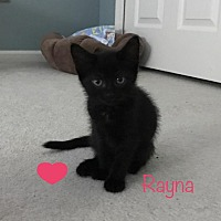 Adopt A Pet :: Rayna - Sterling Hgts, MI