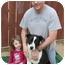 Photo 3 - Border Collie/Labrador Retriever Mix Puppy for adoption in North Hills, California - Captain Cook