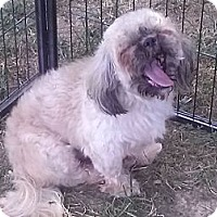 Adopt A Pet :: Bo - Courtesy Post - Cincinnati, OH