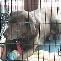 Adopt A Pet :: Qwest - Seattle, WA