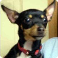 Adopt A Pet :: Nova - Harrisburg, PA