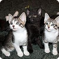 Adopt A Pet :: Alice - Nolensville, TN