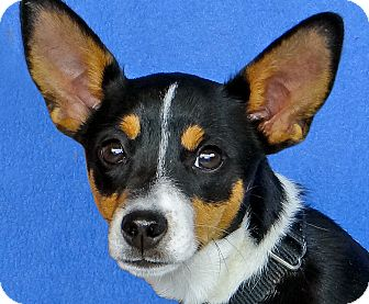 Terrier (Unknown Type, Small) Mix Dog for adoption in Renfrew, Pennsylvania - Dempsey