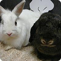 Adopt A Pet :: Sammy Jo & Gizmo - Newport, DE