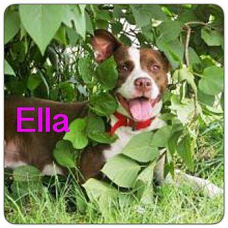 American Pit Bull Terrier Mix Dog for adoption in Grand Ledge, Michigan - Ella