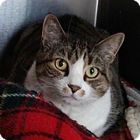 Adopt A Pet :: Trixie - Templeton, MA
