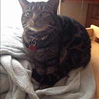 Adopt A Pet :: Pipi - Novato, CA