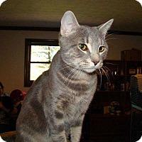 Adopt A Pet :: Jake - Norwich, NY