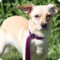 Adopt A Pet :: Ruthie - Marietta, OH