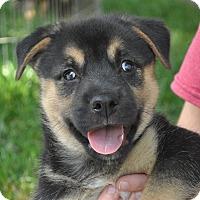 Adopt A Pet :: Liam - Atlanta, GA