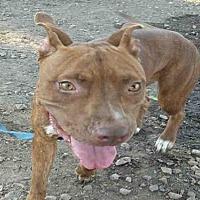 Adopt A Pet :: FRANCINE - Mesa, AZ