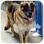 Photo 4 - German Shepherd Dog Dog for adoption in Proctorville, Ohio, Ohio - Keegan