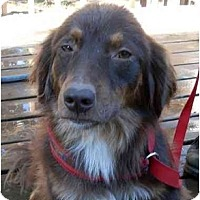 Adopt A Pet :: Grizzy - Harrisburg, PA