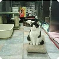 Adopt A Pet :: B.W. - Staten Island, NY