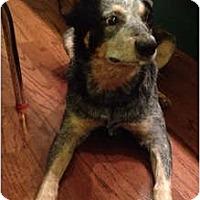 Adopt A Pet :: Raylan - Siler City, NC