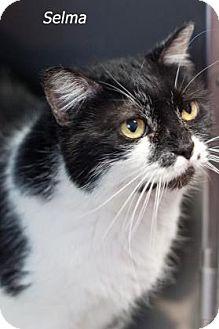 Domestic Mediumhair Cat for adoption in West Des Moines, Iowa - Selma