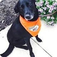 Adopt A Pet :: Louie - Tipp City, OH