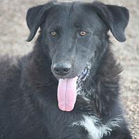 Adopt A Pet :: Bagheera - Hooksett, NH