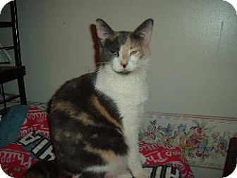 Calico Kitten for adoption in Walnutport, Pennsylvania - Gwen