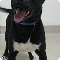 Adopt A Pet :: Jordan - Gary, IN