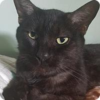 Adopt A Pet :: Ollie - Beacon, NY