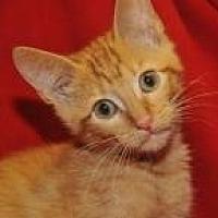 Adopt A Pet :: Lincoln - Garland, TX
