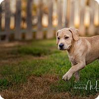 Adopt A Pet :: Leo - Bristol, TN